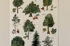 """Poster """"Heimische Bäume"""""""